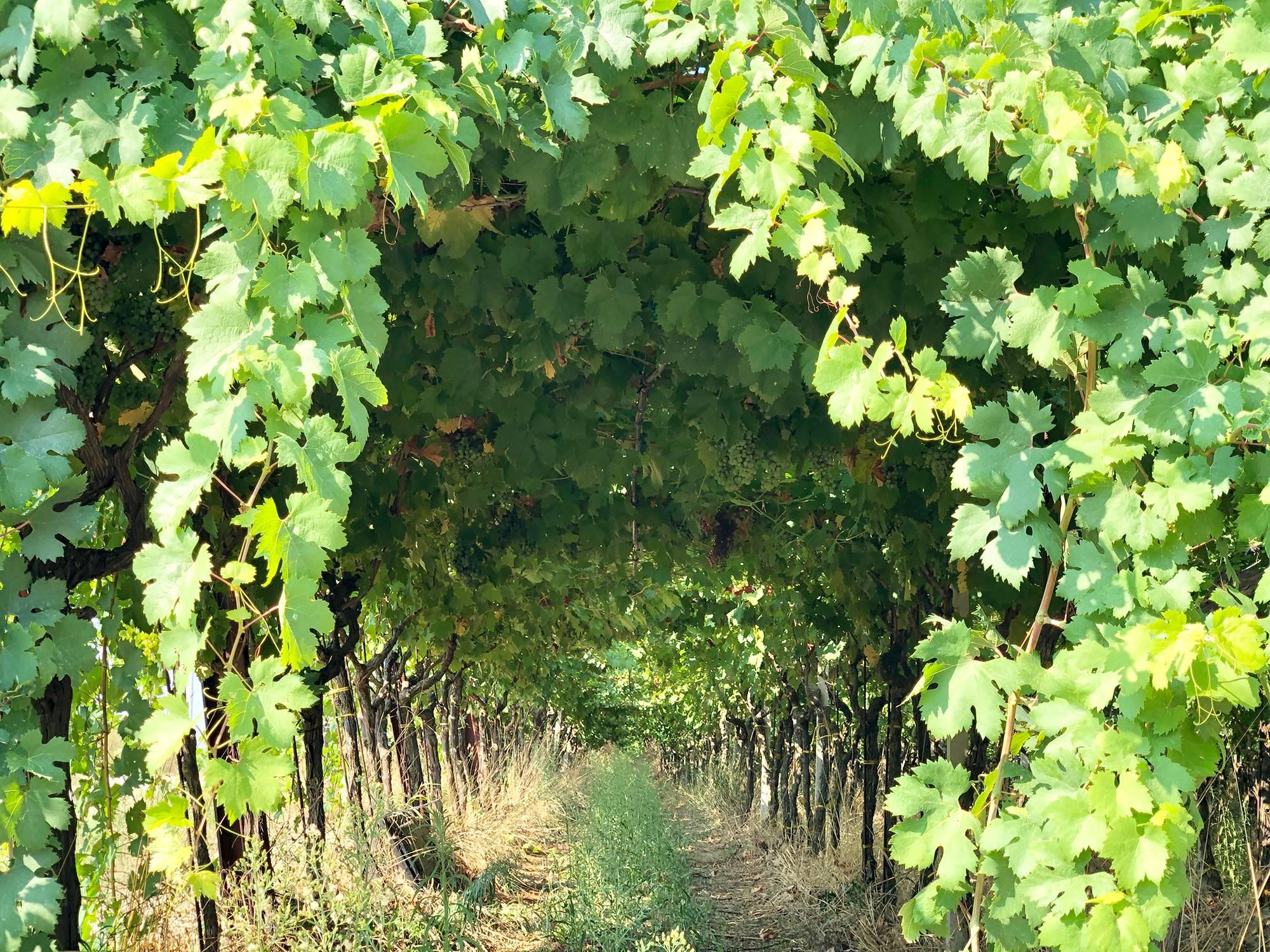 Degustação vinhos